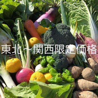 低農薬野菜セット 60(野菜)