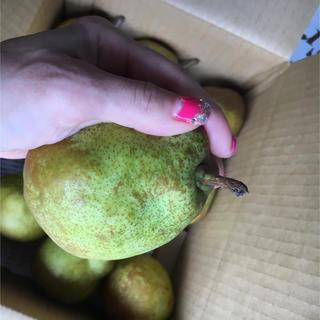 減農薬✨洋梨の王様 ラフランス M 〜L 玉 2、5k バラ詰め(フルーツ)