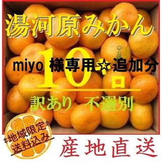 miyo 様専用追加分☆10㌔ みかん 🍊訳あり 湯河原みかん ご家庭用 不選(フルーツ)