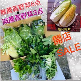 限定3セット★大人気オレンジクイン1点➕サニーレタス3点➕無農薬野菜2点セット(野菜)