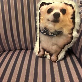 愛犬クッション(おもちゃ/ペット小物)