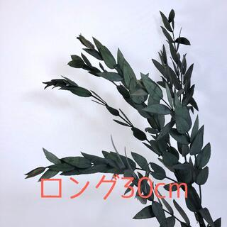 ユーカリ・ロング30cm *グリーン 大地農園(各種パーツ)