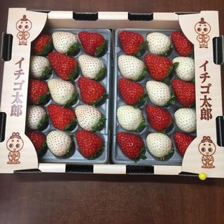 ののこ様専用ページ 奈良県産 紅白苺 詰め合わせset(フルーツ)