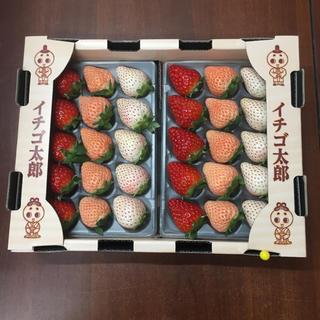 奈良県産 三色苺 食べ比べセット(フルーツ)