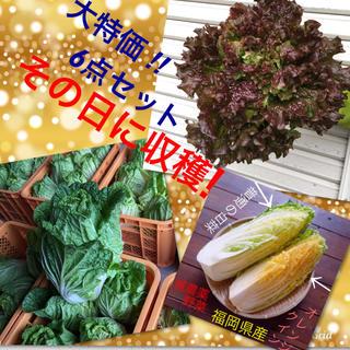 限定3セット★大人気オレンジクイン➕美肌効果サニーレタス➕無農薬野菜6点セット(野菜)