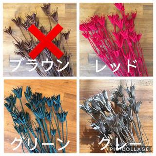 ニゲラオリエンタリス ♡カラー選べる10本(ドライフラワー)