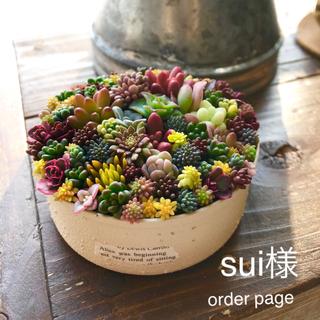 多肉植物 寄せ植え *sui様*order page(その他)