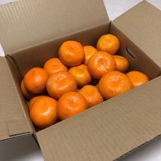【ラスト一箱】大玉みかん 5kg(フルーツ)