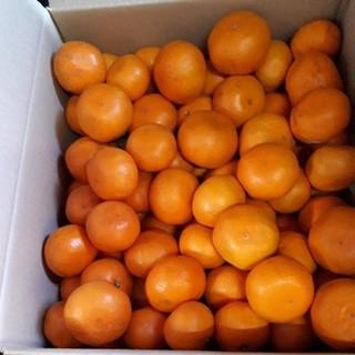 まもなく完売  数量限定 蒲郡みかん 5kg 送料無料 早生  サイズ混合(フルーツ)