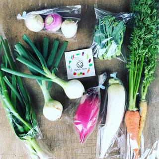 【組み合わせ自由!選べる野菜セット】渥美半島から直送!旬彩野菜バスケット(野菜)
