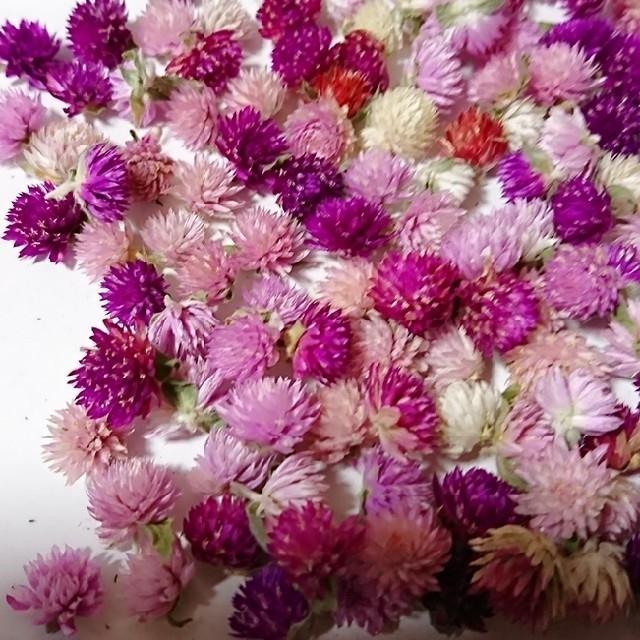 再販♥️︎ドライフラワー♡千日紅 100個α 詰め合わせ 花材 ハンドメイド A ハンドメイドのフラワー/ガーデン(ドライフラワー)の商品写真