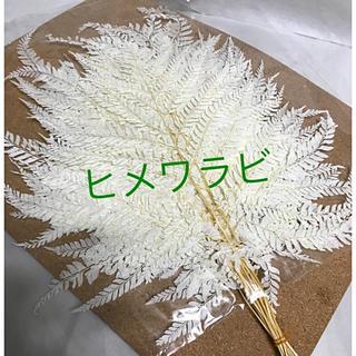ヒメワラビ 白 小分け(プリザーブドフラワー)