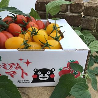 ミニトマト(アイコ)1kg(野菜)