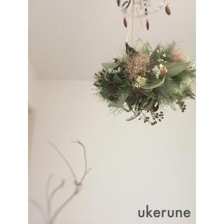 レモンリーフとグリーン スモークツリーの 鳥の巣フライングリース ドライフラワー(ドライフラワー)