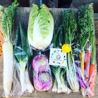 【どーんと白菜入り!組み合わせ自由、選べる野菜セット】旬彩野菜バスケット(野菜)