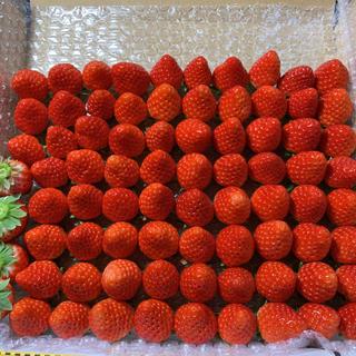 小粒ちゃんだけ♡さがほのか苺●600g●いちご イチゴ(フルーツ)