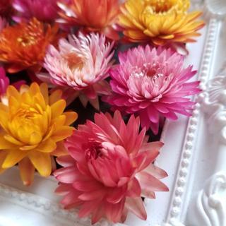 ヘリクリサム⑮カイザイクリース花冠ヘッドドレスプートニア素材♪(ドライフラワー)