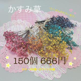 ドライフラワー  かすみ草 150個(ドライフラワー)