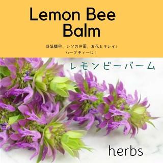 ハーブ【レモンビーバーム】Monarda citriodora 種子10粒(その他)