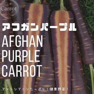 【ニンジン①】アフガンパープル 種子30粒(その他)