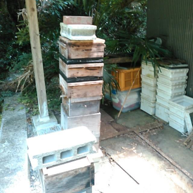 日本ミツバチの巣蜜 300g 送料込み! 食品/飲料/酒の食品(野菜)の商品写真