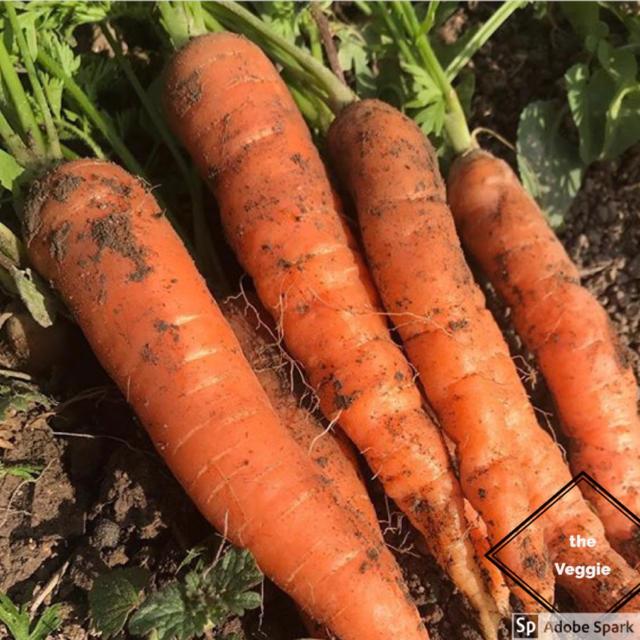 新鮮野菜詰め合わせ!京都 無農薬 減農薬野菜 食品/飲料/酒の食品(野菜)の商品写真