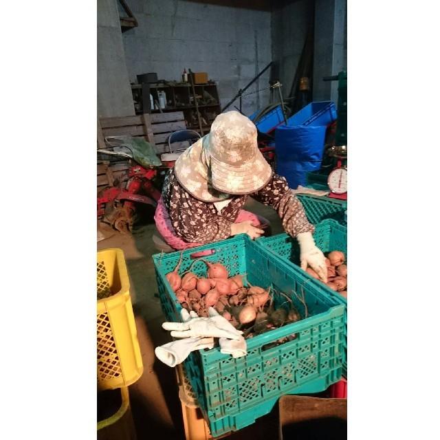 種子島産安納芋(安納紅&安納こがね)5キロMサイズ 食品/飲料/酒の食品(野菜)の商品写真