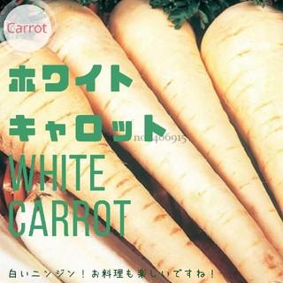 ニンジン②【ホワイトキャロット】種子30粒(その他)