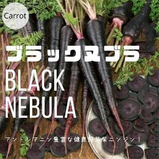 ニンジン③【ブラックヌブラ】種子30粒(その他)