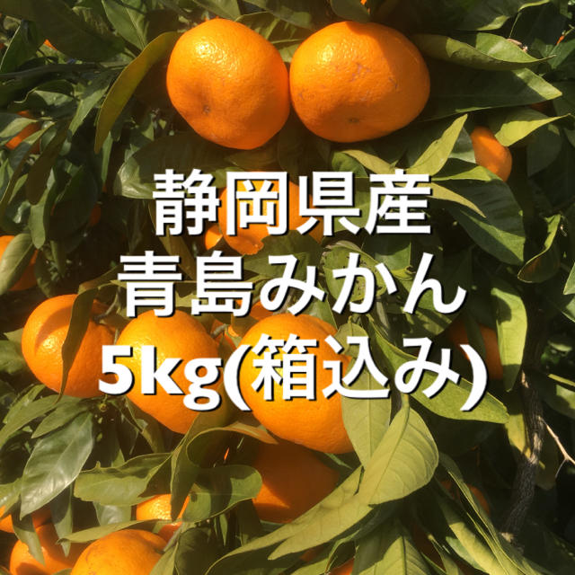 青島みかん 5kg 箱込み 食品/飲料/酒の食品(フルーツ)の商品写真