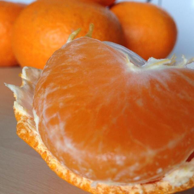 しま様専用 温州みかん(青島) 10kg 食品/飲料/酒の食品(フルーツ)の商品写真