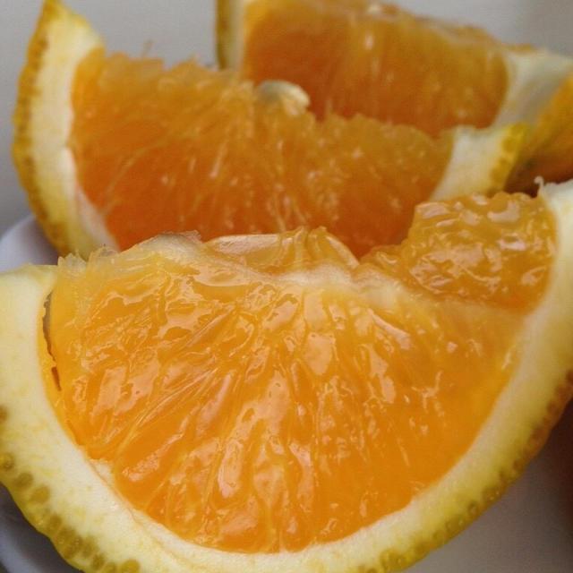 pochitama012様専用スイートスプリング〜木なり完熟〜5kg 食品/飲料/酒の食品(フルーツ)の商品写真