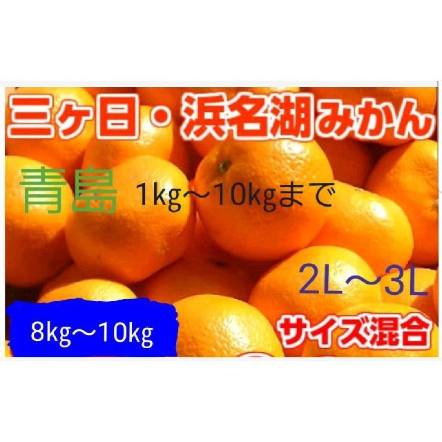『saisai様専用』三ヶ日みかん 食品/飲料/酒の食品(フルーツ)の商品写真