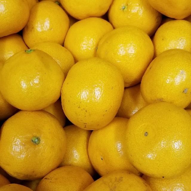 熊本県の早生みかん 5kg 食品/飲料/酒の食品(フルーツ)の商品写真