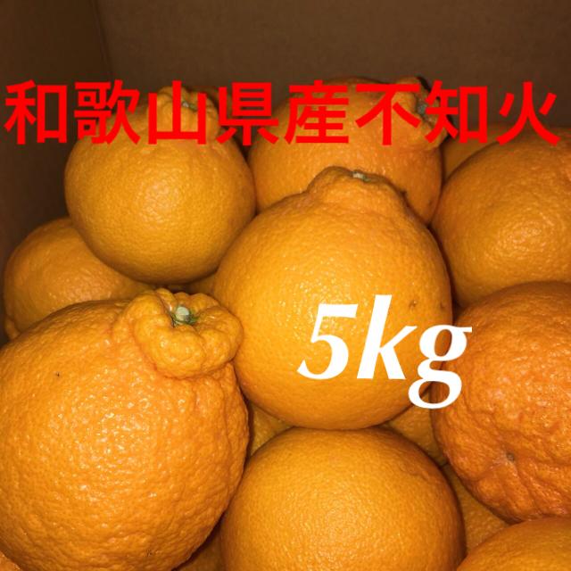 和歌山県産不知火5kg 食品/飲料/酒の食品(フルーツ)の商品写真