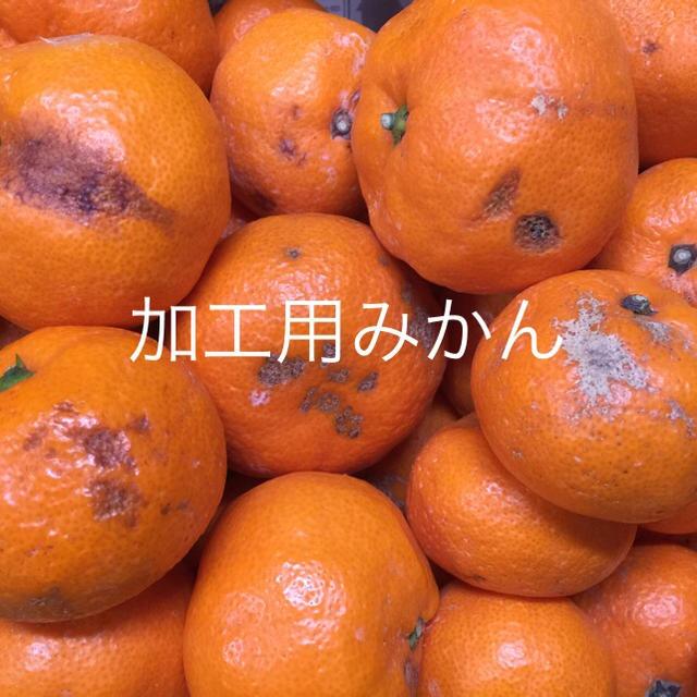 立城様専用‼️紀州 蔵出し 加工用 みかん 食品/飲料/酒の食品(フルーツ)の商品写真
