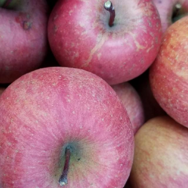 信州中野市産 キズありサンふじ10㎏ 食品/飲料/酒の食品(フルーツ)の商品写真