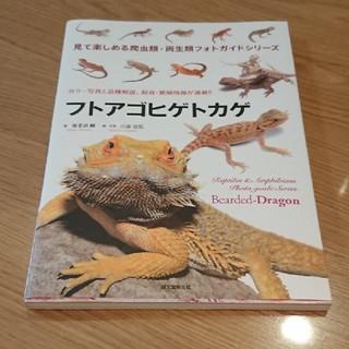 フトアゴヒゲトカゲ 本(爬虫類/両生類用品)