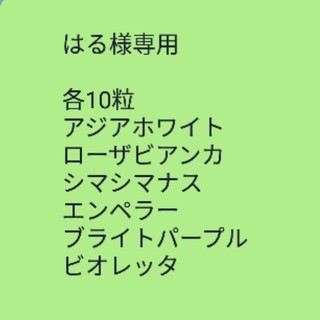 はる様専用 ナス【白いナス】アジアホワイト 種子20粒(その他)