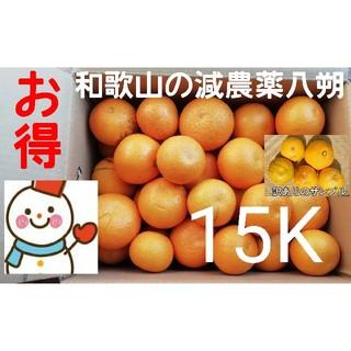お得な15㌔箱❤️減農薬八朔❤️和歌山自家栽培(フルーツ)