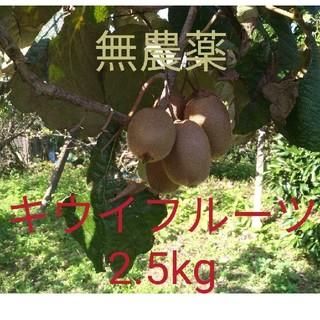 無農薬! 福岡県産 キウイフルーツ(ヘイワード) 約2.5kg(フルーツ)