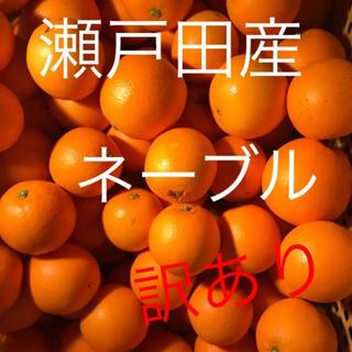 訳あり♪ネーブルオレンジ  コンパクト箱(フルーツ)
