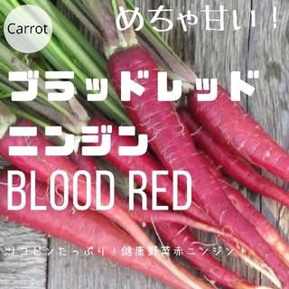 ニンジン⑥【ブラッドレッド】赤ニンジン 種子30粒(その他)