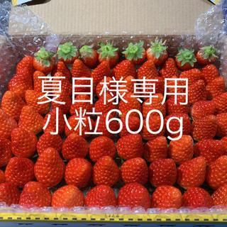 14(月)収穫&発送●夏目様専用(フルーツ)