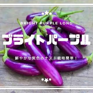 ナス【ブライトパープル】種子20粒(その他)