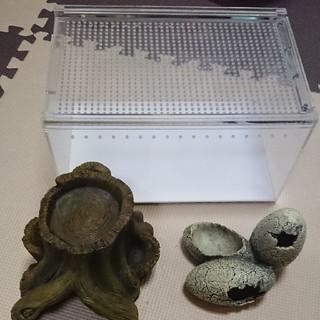 爬虫類 飼育用品 セット(爬虫類/両生類用品)