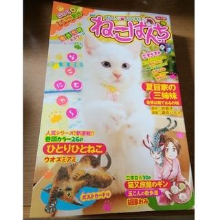 最新刊 「ねこぱんち 猫の日号」(漫画雑誌)