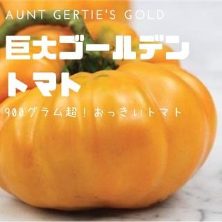 トマト【巨大トマト】Aunt Gertie's Gold ゲッティズ 種子20粒(その他)
