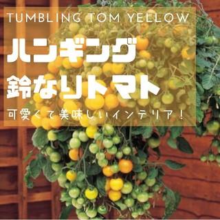 トマト【鈴なりトマト】ハンギングにも!タンブリングトムイエロー 種子20粒(その他)
