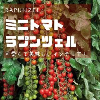 ミニトマト【ラプンツェル】Rapunzel 種子20粒(その他)
